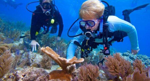Jane Lubchenco replanting coral